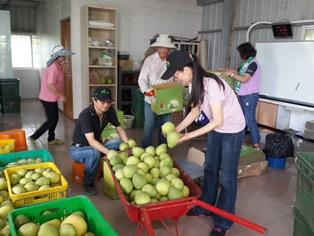 106年臺南郵局「柚見你和我」關懷小農公益活動