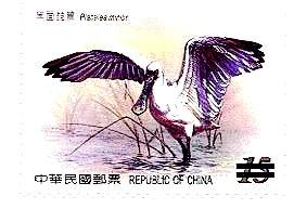 四草紅樹林區_11
