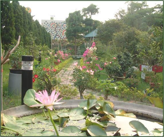 冷氣水塔底座栽植蓮花